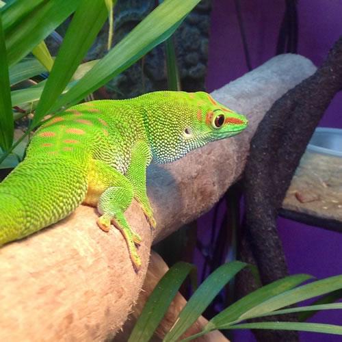 country-care-pet-hospital-gecko-2