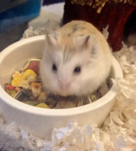 country-care-pet-hospital-guinea-pig-2