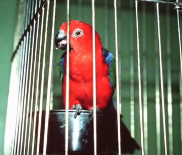country-care-pet-hospital-parrot