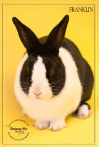 country-care-pet-hospital-rabbit