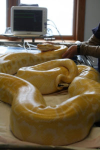 country-care-pet-hospital-snake-1