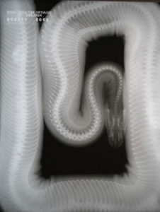 country-care-pet-hospital-snake-2
