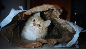 Deming enjoys hiding in a paper bag