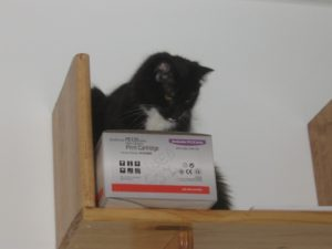 Dr. Science enjoys a high-up perch to survey his surroundings
