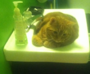 sandra viger cat on sink