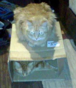 sandra viger cats